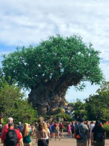 If you are doing Keto and going to Animal Kingdom, you need this! These tips for staying keto at Animal Kingdom are THE BEST! I am so happy I found these GREAT home decor ideas and tips! Now I have great ways to stay Keto. So pinning!